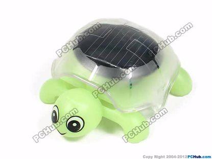 3Light Green, Hungry Tortoise